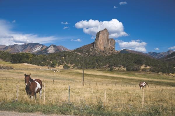 Crawford Needle And Horses
