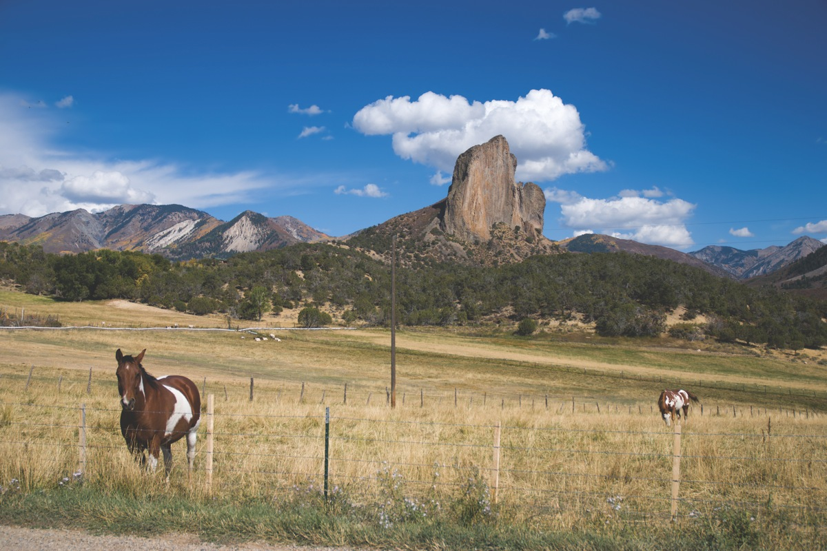 Crawford Needle And Horses